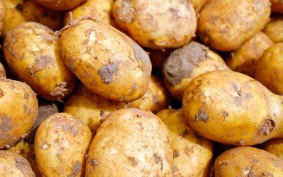 Clarebout Potatoes – Toujours pas de communication officielle!